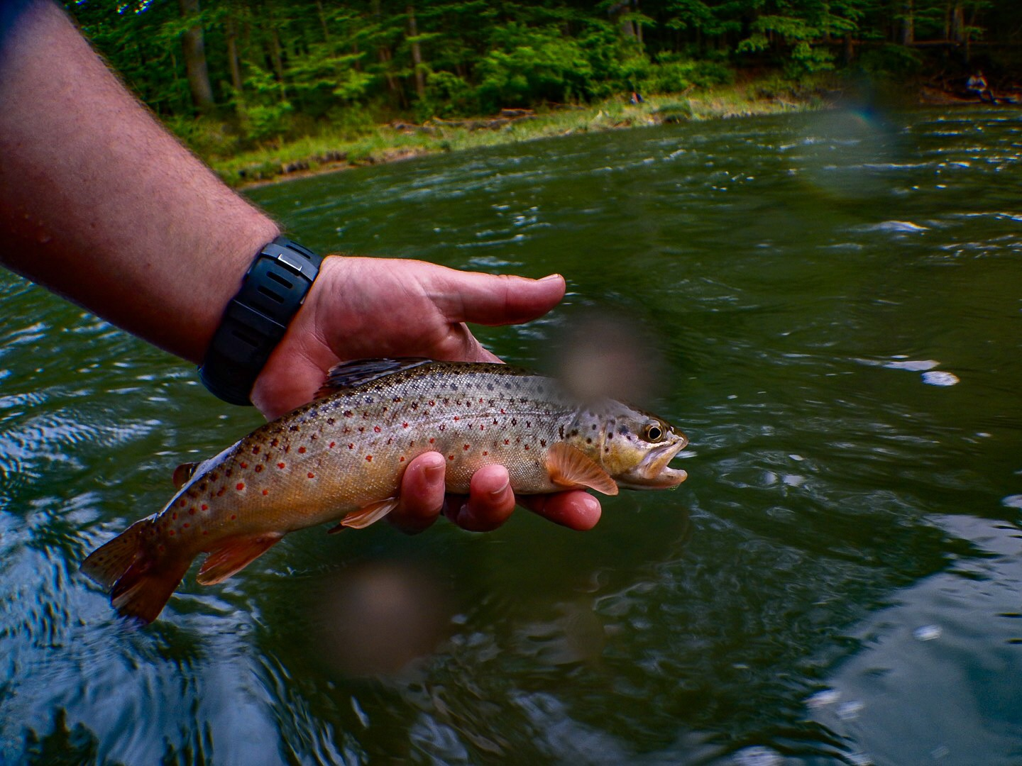 Pennsylvania fly fishing and hatch report penns creek for Hatch fly fishing
